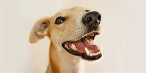 Dental health for Dogs and Cats